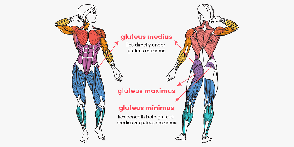 The gluteus maximus lies on top of both the gluteus medius and the gluteus minimus.