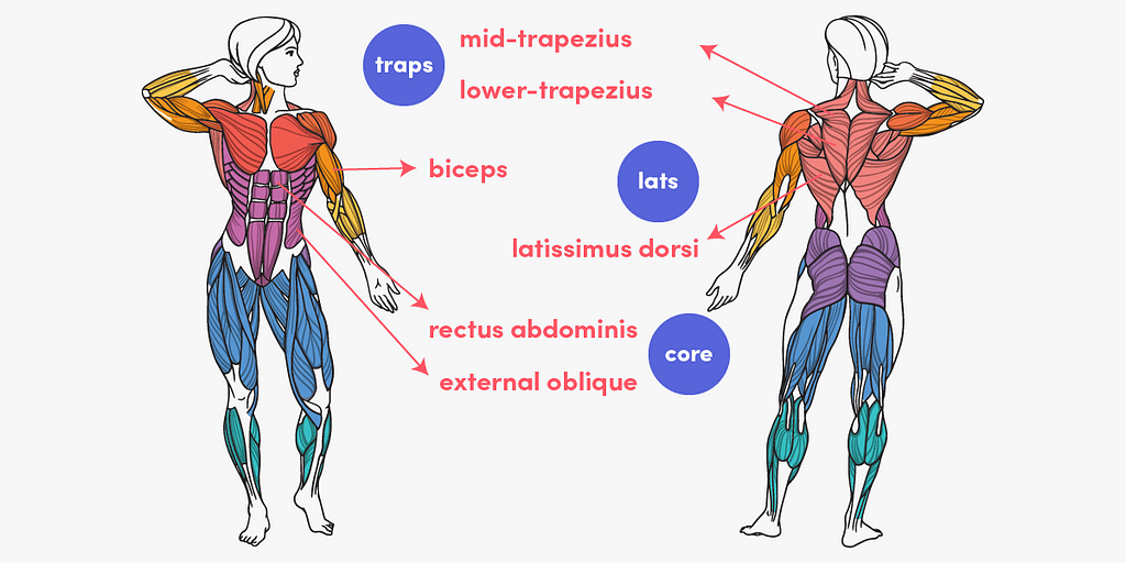 The muscles which are most activated during pull-ups are the lats, biceps, traps and core.