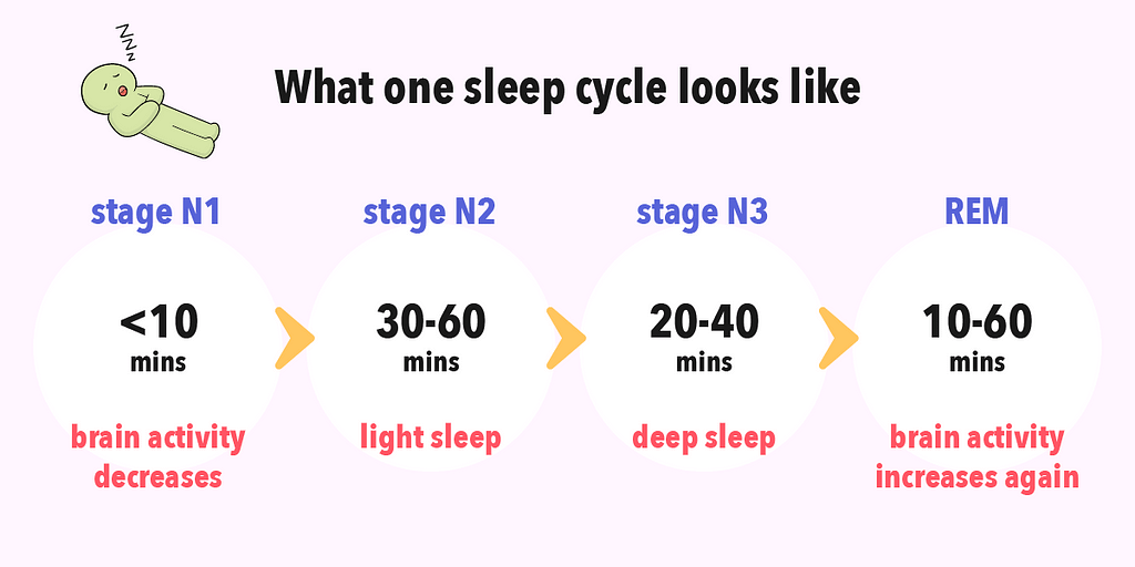 Overview of one sleep cycle from stage N1 to rapid eye movement stage.